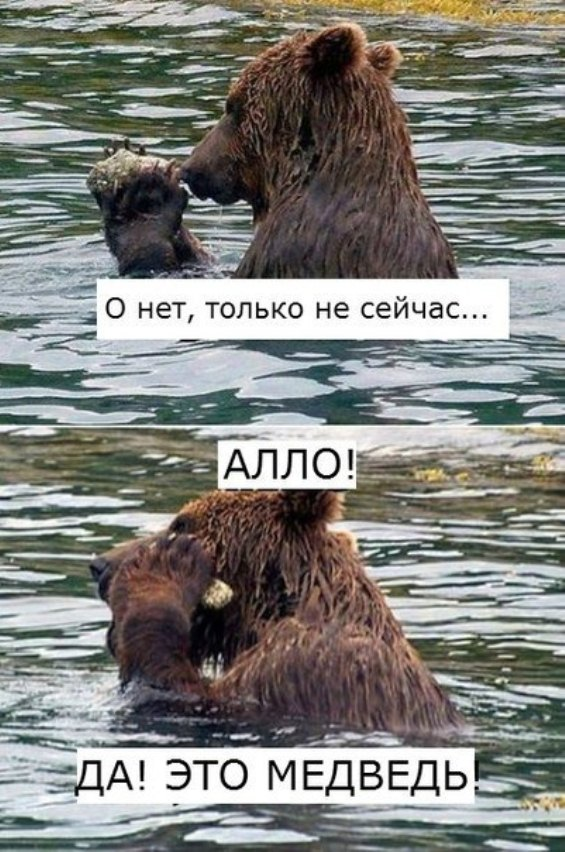 биржевой медведь