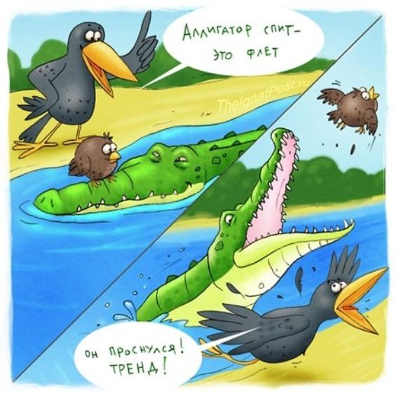 аллигатор спит