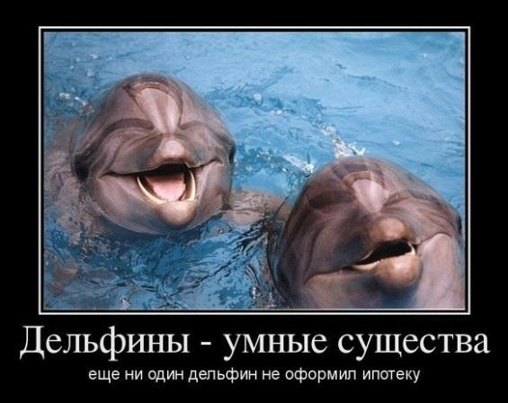 дельфины не берут ипотеку