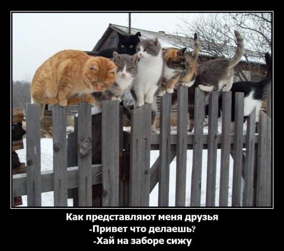сижу на заборе