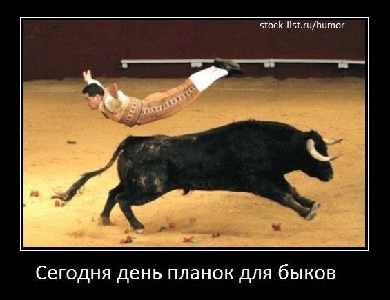 день планок для быков