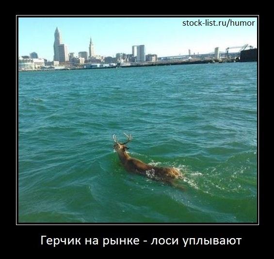 лоси уплывают