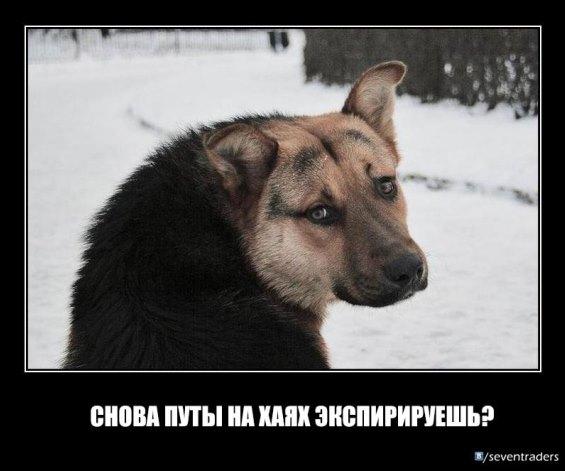 собака трейдер