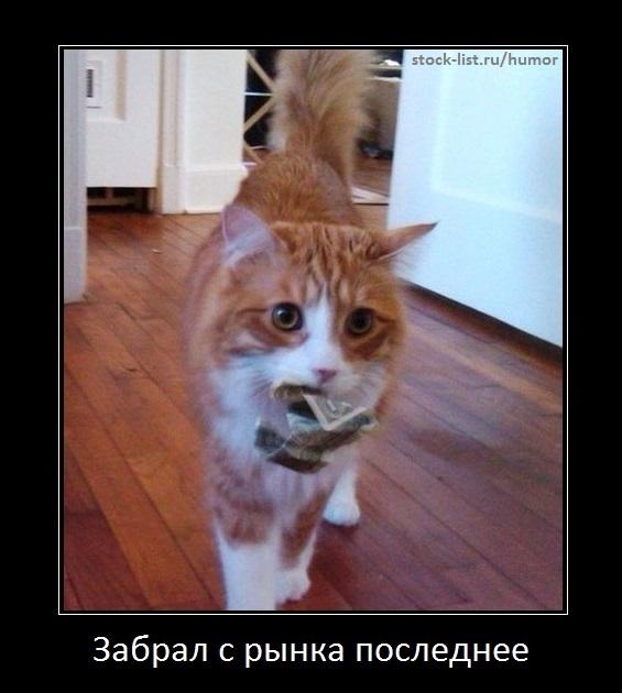 биржевой кот