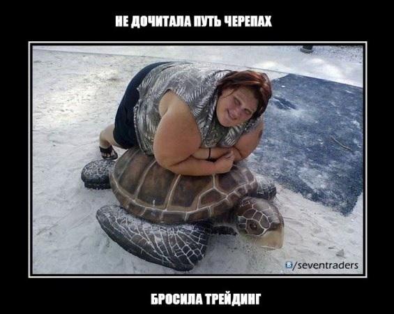 дочитала путь черепах