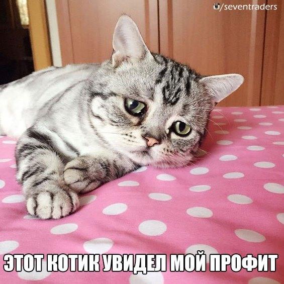 этот котик увидел мой профит