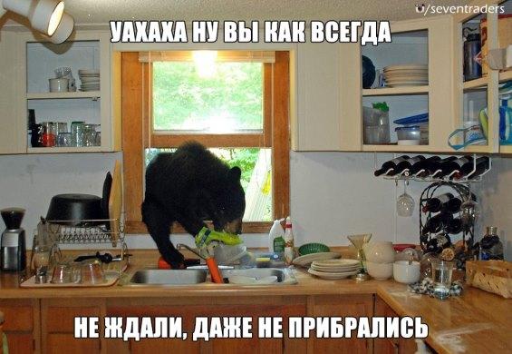 медведь залез в окно