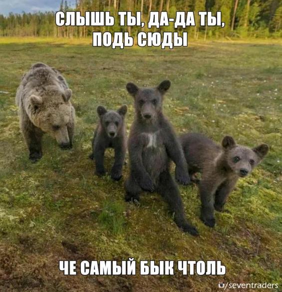 медведи на быка